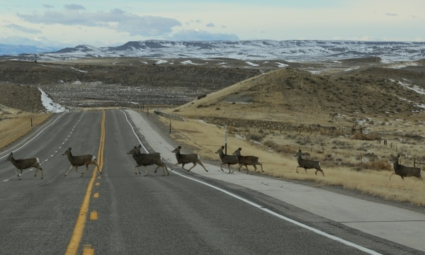 Deer Crossings and Identity Theft?