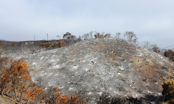 Call for Funds for CA Fires