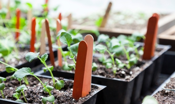 Growing Your Own Fruits and Veggies